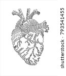 graphic anatomical heart | Shutterstock .eps vector #793541455