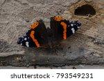 vanessa atalanta  red admiral... | Shutterstock . vector #793549231