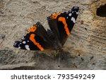vanessa atalanta  red admiral... | Shutterstock . vector #793549249