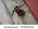vanessa atalanta  red admiral... | Shutterstock . vector #793549255