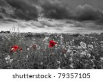 Poppies In A Field In Black An...