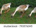 Three Goose Outdoor