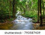 cascade falls over mossy trunk... | Shutterstock . vector #793587439
