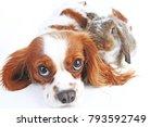 animal friends. true pet... | Shutterstock . vector #793592749