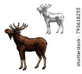 elk wild animal sketch vector... | Shutterstock .eps vector #793618255