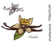 vanilla spice herb sketch icon. ... | Shutterstock .eps vector #793619149