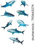 Sharks Isolated. Caribbean Ree...