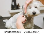 Stock photo grooming dog of west highland white terrier 793685014