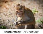 monkey eating corn on the road... | Shutterstock . vector #793705009