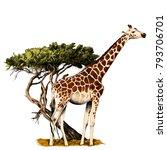 a giraffe standing near a tree...   Shutterstock .eps vector #793706701