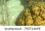 beautiful fish and coral... | Shutterstock . vector #793714699