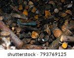 log a bundle of firewood   Shutterstock . vector #793769125