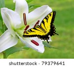 A Gorgeous White Christmas Lily ...