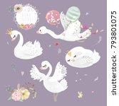 beautiful white swan  goose ... | Shutterstock .eps vector #793801075