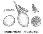 lemon set hand drawn. isolated... | Shutterstock .eps vector #793850551