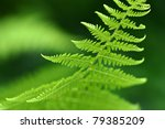A Macro Photo Of A Fern
