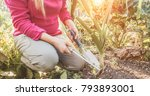 woman gardening during sunny... | Shutterstock . vector #793893001