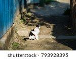 cat in sunset light | Shutterstock . vector #793928395