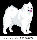 portrait of a decorative dog... | Shutterstock .eps vector #793948474