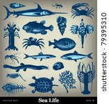 Engraving Vintage Sea Life Set...