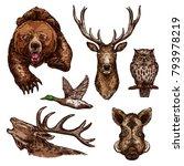 wild animals and birds sketch... | Shutterstock .eps vector #793978219