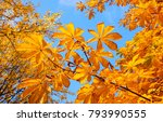 autumn yellow leaves on blue... | Shutterstock . vector #793990555