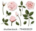 a set of flower parts.... | Shutterstock .eps vector #794003029