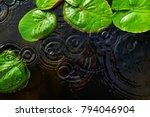 Top View Of Green Lotus Leaves...