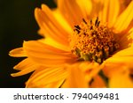 bouquet of bright yellow