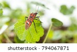 red insect over a green leaf ... | Shutterstock . vector #794067871