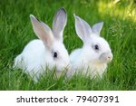 Stock photo baby white rabbits in grass 79407391