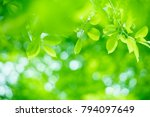 closeup nature view of green... | Shutterstock . vector #794097649