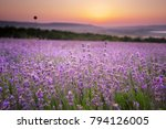 meadow of lavender. nature... | Shutterstock . vector #794126005
