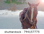 closeup brown horse in the... | Shutterstock . vector #794157775