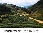 beautiful tea plantation on hill   Shutterstock . vector #794163379