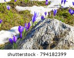 spring background with close up ... | Shutterstock . vector #794182399
