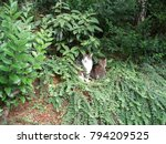 cats in the park | Shutterstock . vector #794209525
