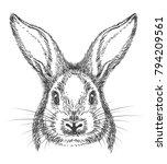 bunny drawing. vintage hand... | Shutterstock .eps vector #794209561