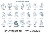 best medicinal herbs for... | Shutterstock .eps vector #794230321