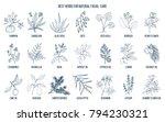 best medicinal herbs for... | Shutterstock .eps vector #794230321
