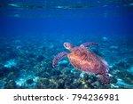 sea turtle in blue water | Shutterstock . vector #794236981
