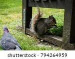 squirrel at the park | Shutterstock . vector #794264959