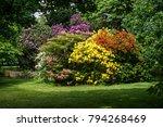 beautiful wildlife flowers in... | Shutterstock . vector #794268469