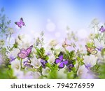 amazing field bells and daisies ... | Shutterstock . vector #794276959