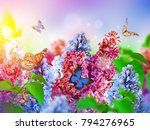amazing spring lilac on a... | Shutterstock . vector #794276965