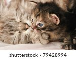 Kitten and her mother - stock photo