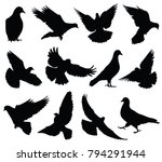 flying dove vector silhouettes... | Shutterstock .eps vector #794291944
