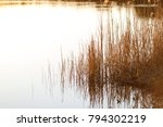 reed vs. sunset. selective... | Shutterstock . vector #794302219