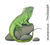 Iguana Lizard On A Stone Hand...
