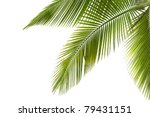 Part Of Palm Tree On White...